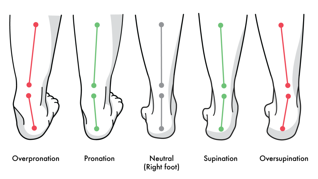 pronation and spination
